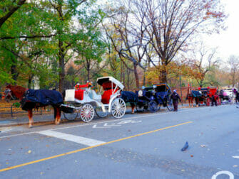 Paardenkoets in Central Park
