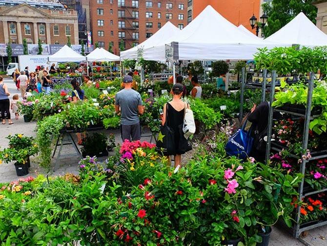 Markten in New York - Planten op Union Square