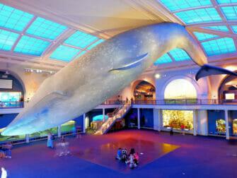 American Museum of Natural History in New York - Ocean Life