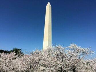 Dagtrip Washington DC - Monument