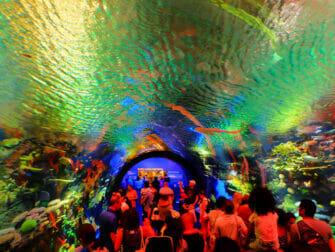 New York Aquarium - Koraalrif