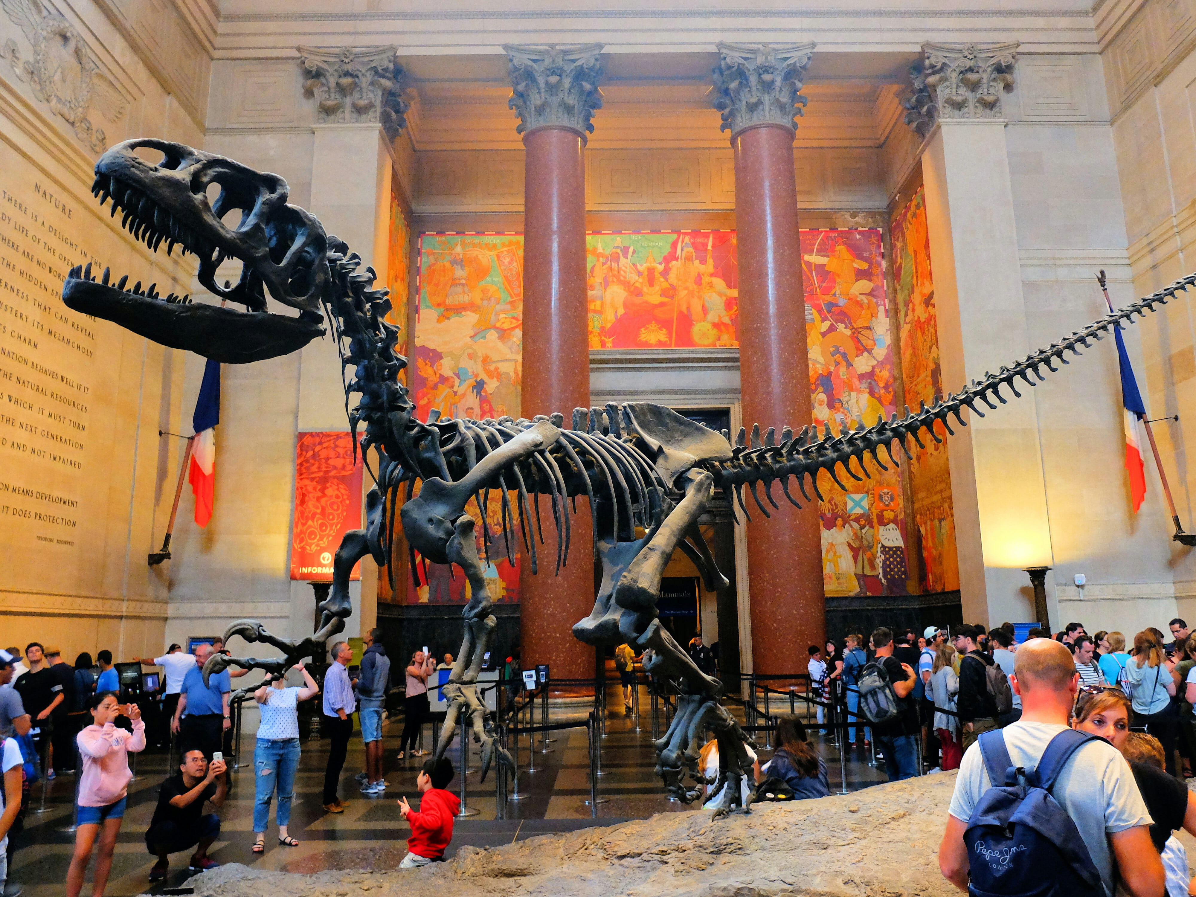 American Museum of Natural History in New York T Rex High Quality Wallpaper