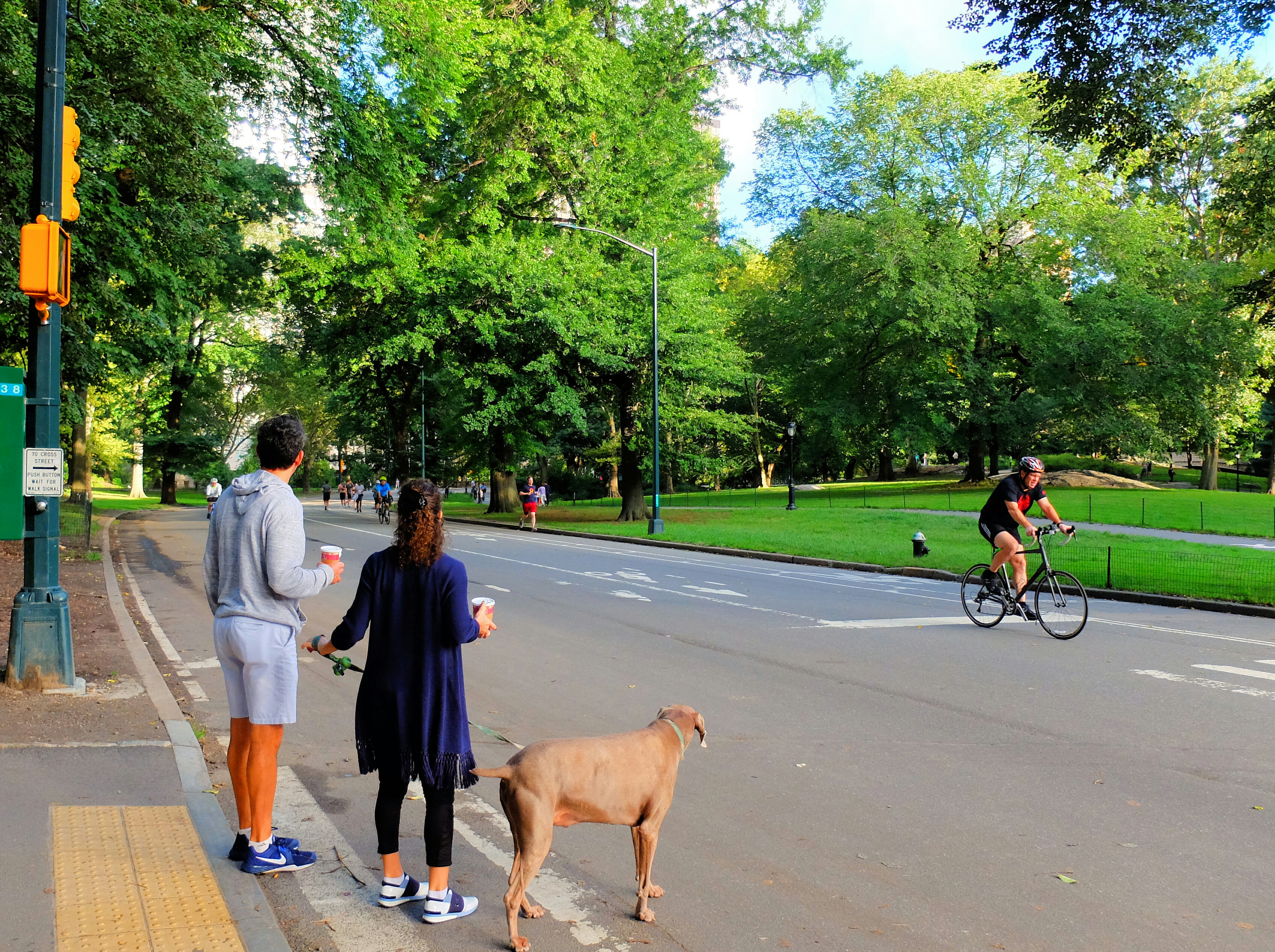Biking in Central Park High Quality Wallpaper